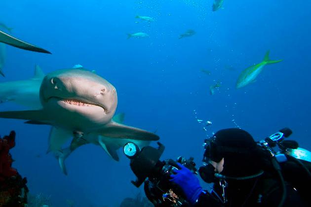 Есть некоторые виды акул представляют промысловый интерес у человека