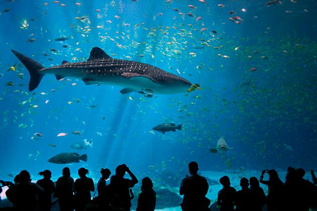 Содержать акул в неволе, крайне проблематично и хлопотно
