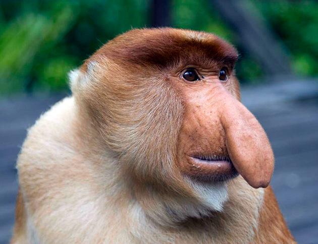 На сегодняшний день науке известно более 400 видов обезьян