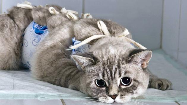 В целом отзывы о папаверине для кошек — положительны, если соблюдать дозировку и рекомендации ветеринара