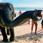 Зачем слону нужен хобот