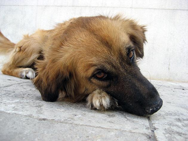 Болезни почек у собаки