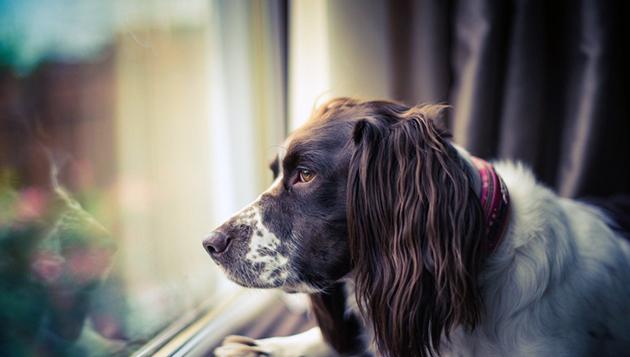 При первых подозрениях на болезнь почки, вашу собаку необходимо обследовать в ветеринарной клинике