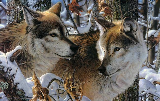 Что едят волки