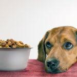 Корм Апплавс (Applaws) для собак