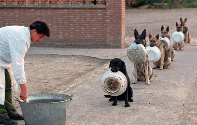 У собак живущих на улице ежедневно в питание должны присутствовать: мясо, тушёные овощи и каши с животным жиром, а так же витамины