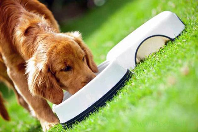 Владельцы собак отмечают, что какой-то из видов кормов Applaws может не понравиться питомцам, а от какого-то они будут без ума
