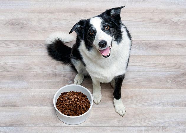 не забывайте, что в зависимости от возраста рацион питания вашей собаки должно отличаться