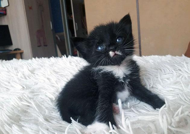 С помощью прощупывания детородных органов, можно определить пол котенка
