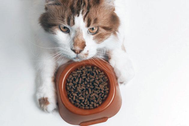 Корм под конкретную породу кошек выпускают не все производители