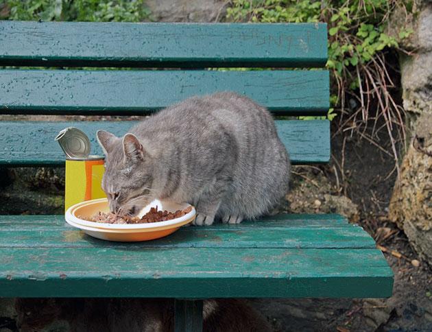 Бездомным кошкам выбирать не приходится – они едят, что подвернется