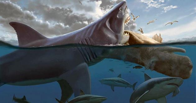 Основной рацион питания мегалодона составлял — мелкие акулы и черепахи