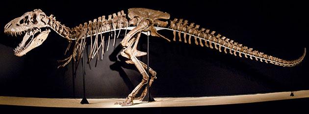 Tarbosaurus bataar, а впервые тарбозавры были обнаружены в процессе советско-монгольской экспедиции в аймак Умнеговь и формацию Нэмэгт