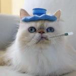 Температура у кошки