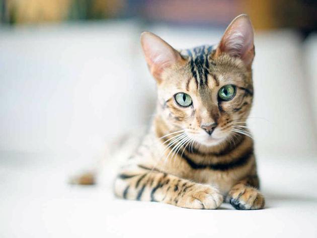 Пониженная температура у кошки зачастую бывает при долгом пребывание на холоде