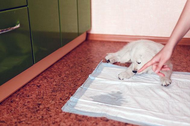 Нельзя ругать щенка, если он покинул место происшествия несколько секунд назад