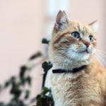 Максидин для кошек