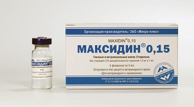 Прежде чем использовать максидин — глаза/нос животного очищают от корочек