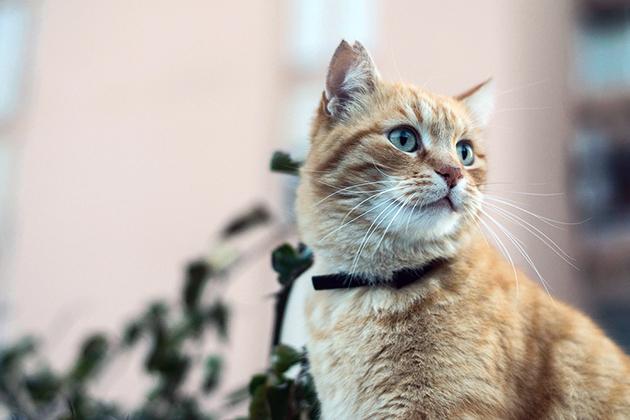 Капли максидин для кошек