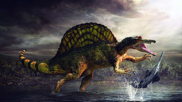 У спинозавра был удивительный «парус», располагающийся на гребне верхушки спины