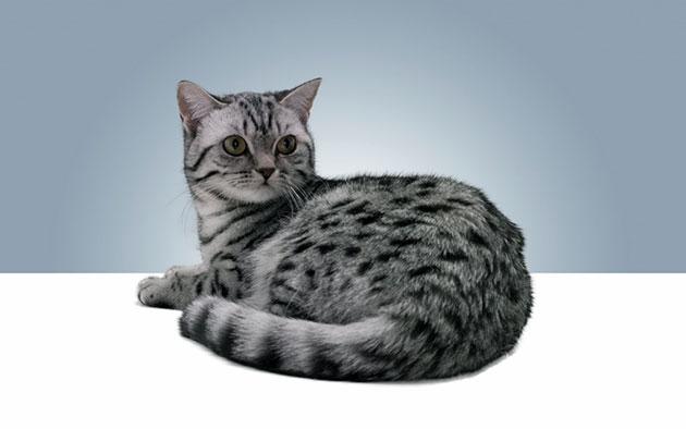 Репродуктивные органы кошки окончательно формируются к 5 месяцам