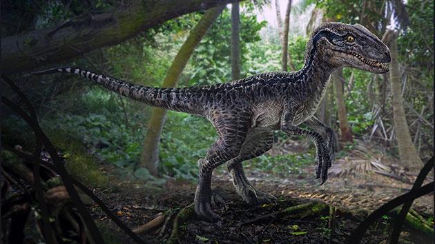 Велоцираптор (лат. Velociraptor)