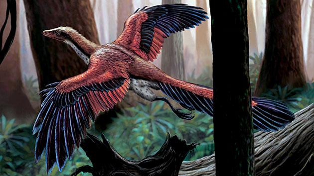К основным природным врагам археоптерикса любого возраста ученые склонны относить только птерозавров