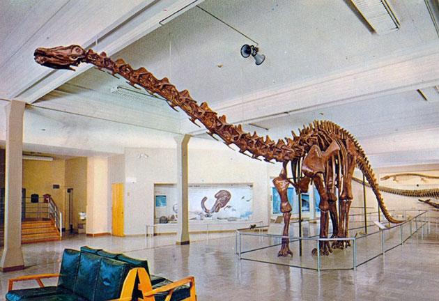 Первые окаменелости диплодока датированы 1877 годом