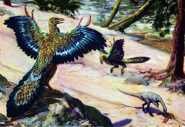 Археоптерикс мог летать, или хотя бы очень хорошо планировать