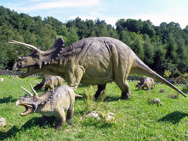 Трицератопсы жили в мягком, субтропическом климате