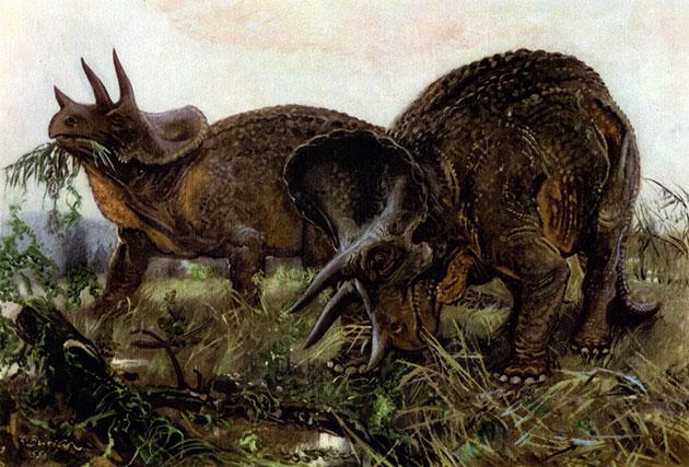 Трицератосы жили около 68-65 миллионов лет назад – в меловом периоде