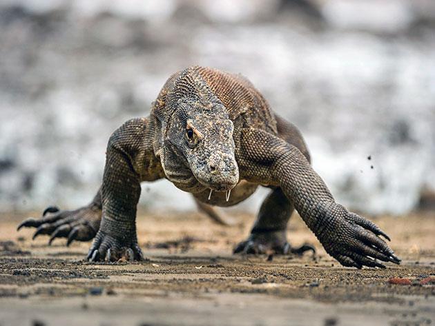 Глаза рептилий, в зависимости от вида, отличаются большей или меньшей степенью развитости