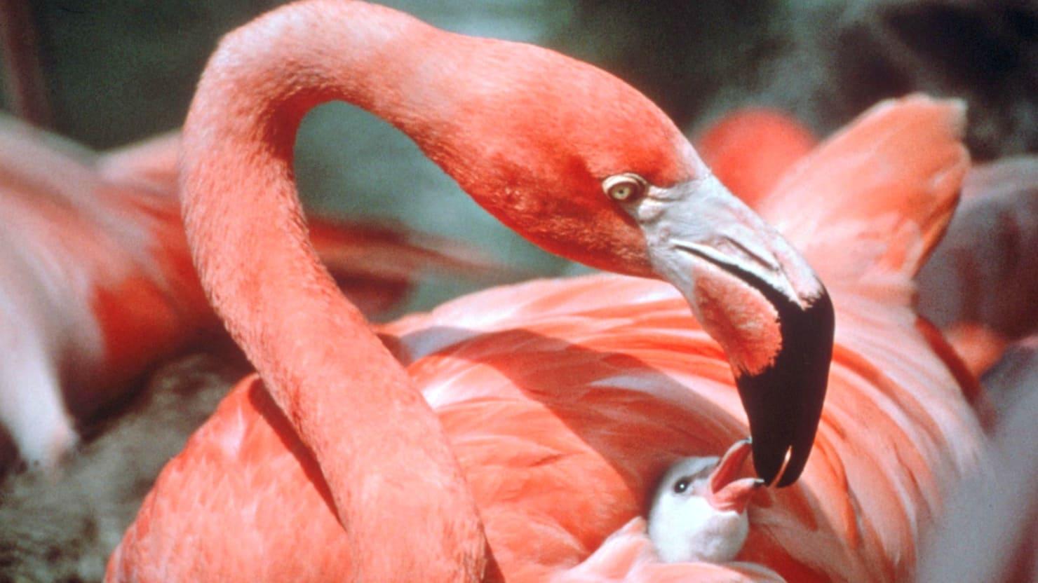 flamingo_img_1