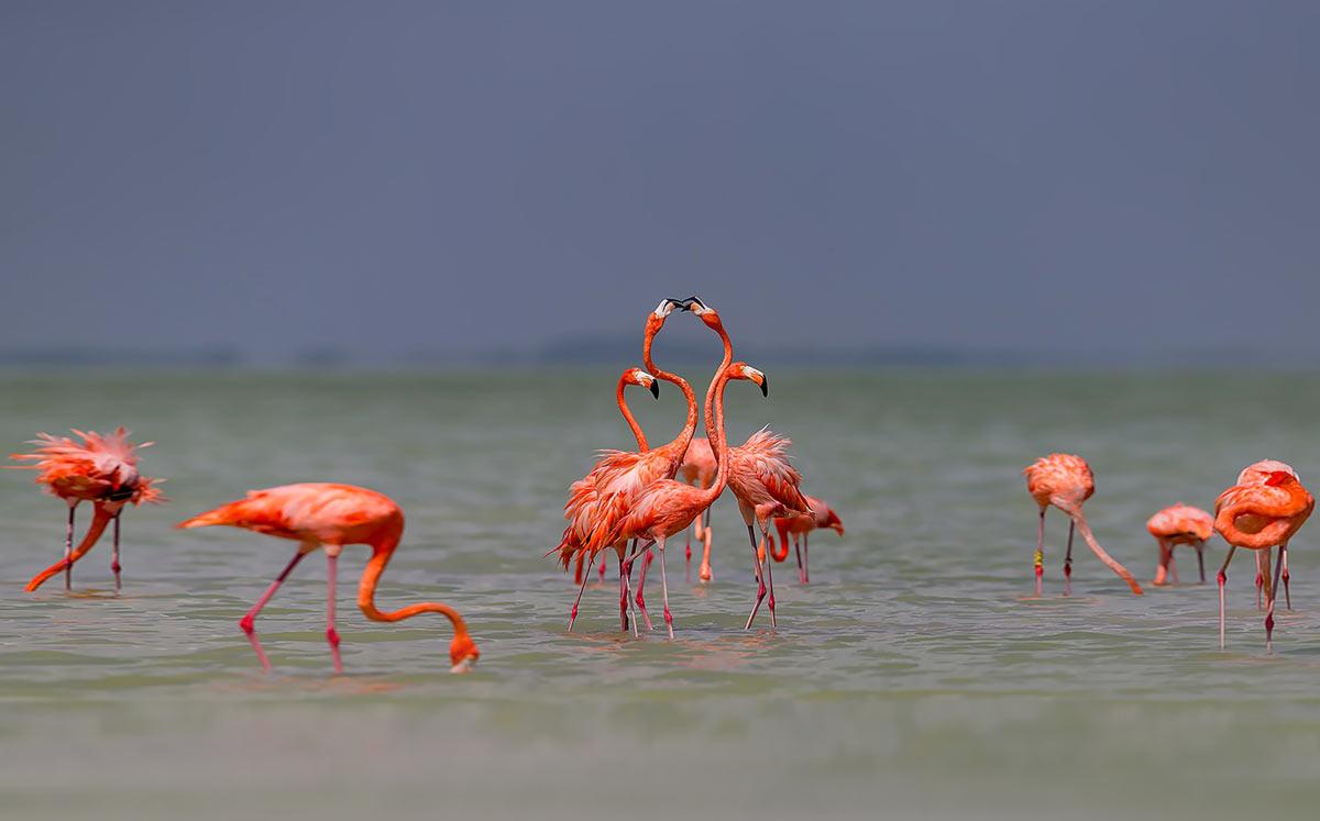 flamingo_img_2