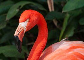 flamingo_img_3