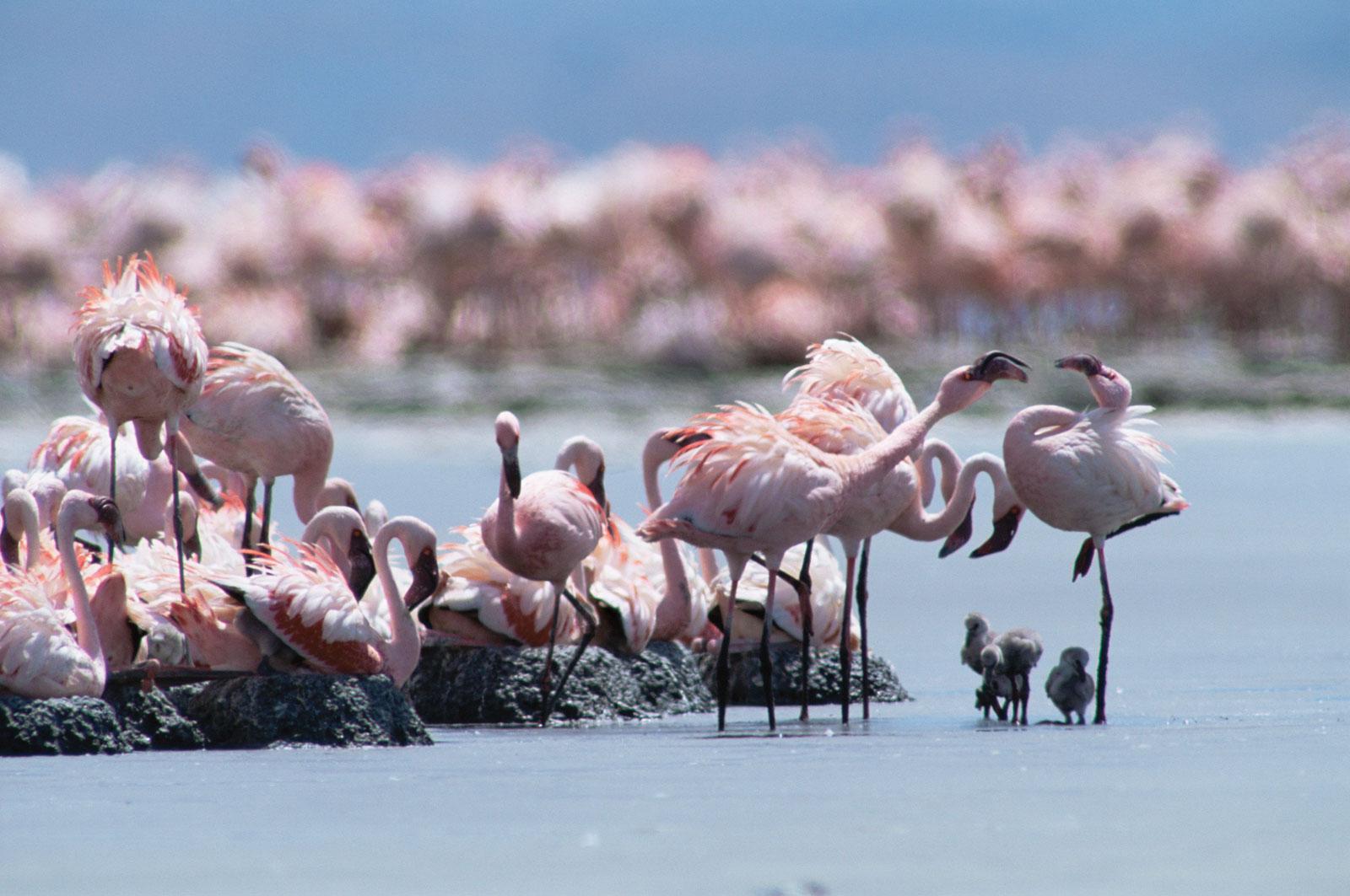 flamingo_img_4