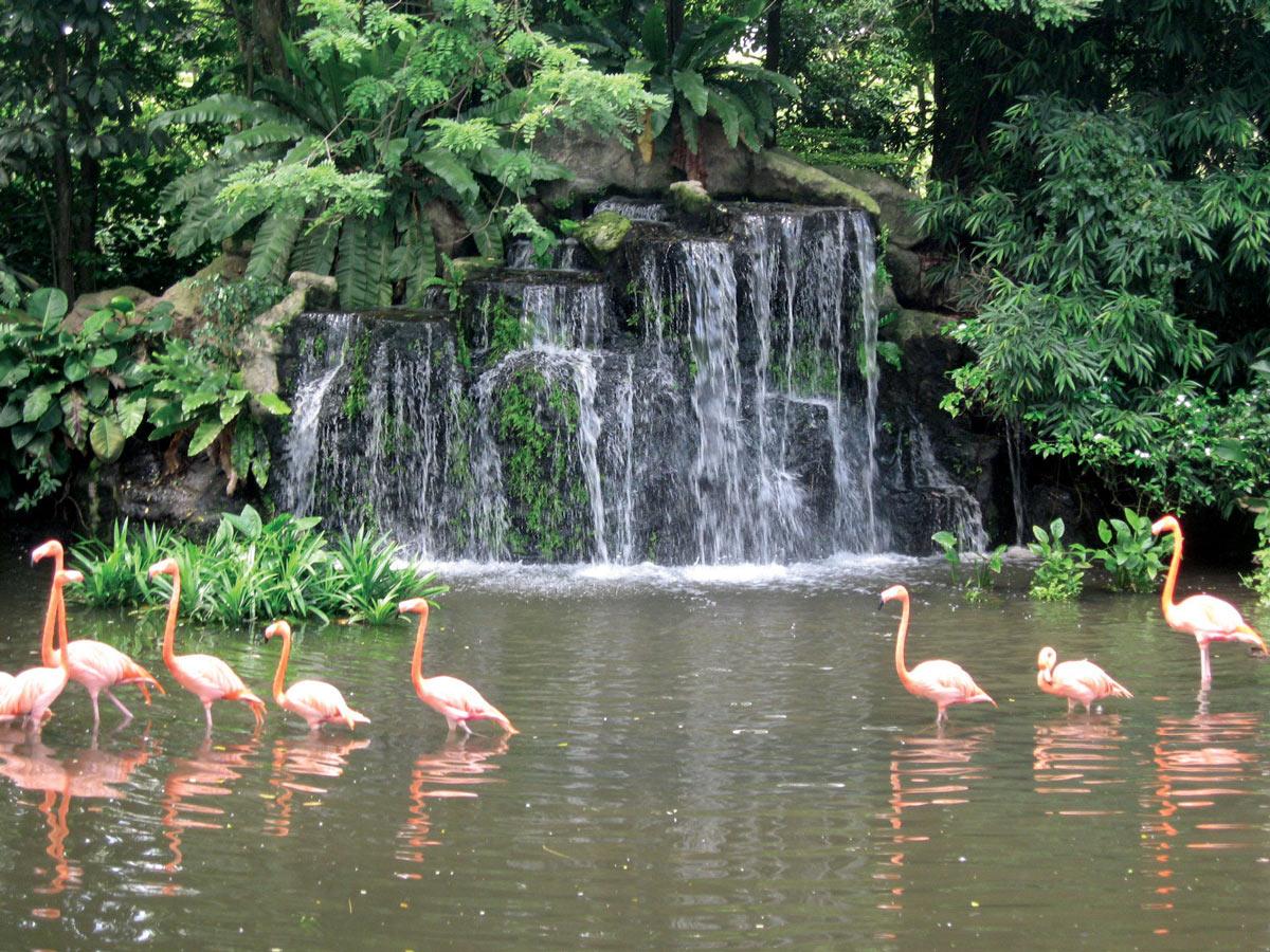 flamingo_img_5
