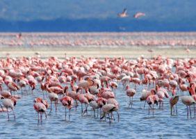flamingo_img_6