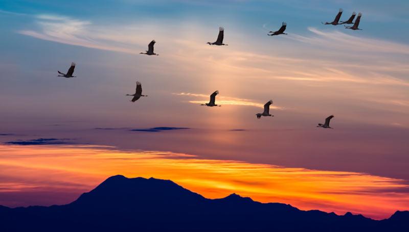 Перелёт птиц является своего рода приспособлением к сезонным климатическим изменениям