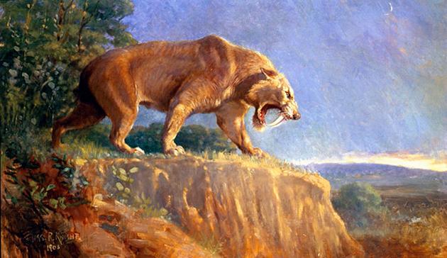 Саблезубые кошки являлись активными хищниками, но иногда употребляли падаль