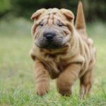 Породы собак — список с названиями и фото