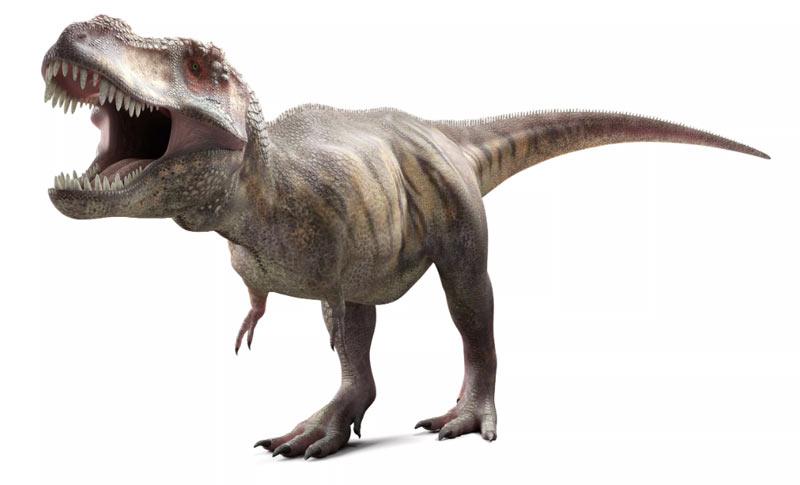 Тираннозавр был чрезвычайно чутким зверем: в этом ему помогало более острое, чем у собаки обоняние