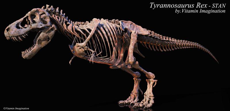 Тираннозавр обладал вытянутым массивным хвостом, выполнявшим роль балансира
