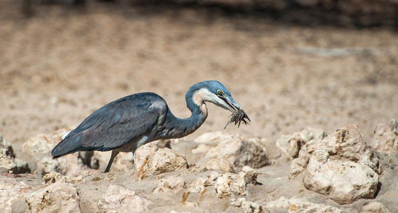 Птицы разыскивают пропитание днем, в сумерки и даже ночью, правда, охоту во тьме практикуют не все