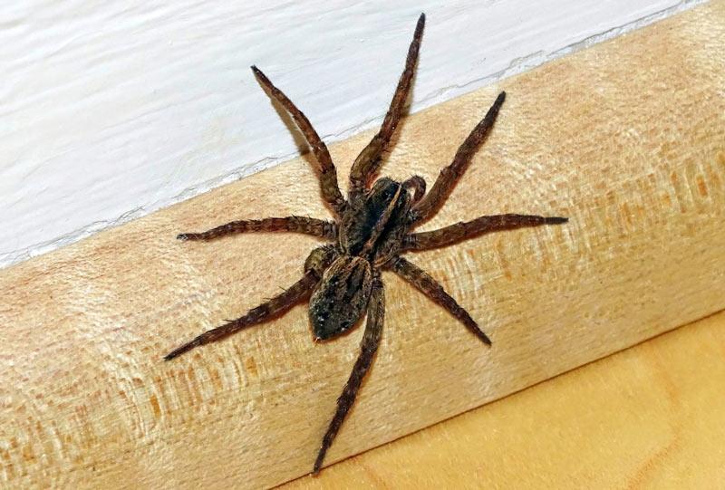 Большинство видов проявляют агрессию только в случае, когда опасность грозит им самим или их потомству