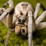 Пауки (лат. Araneae)