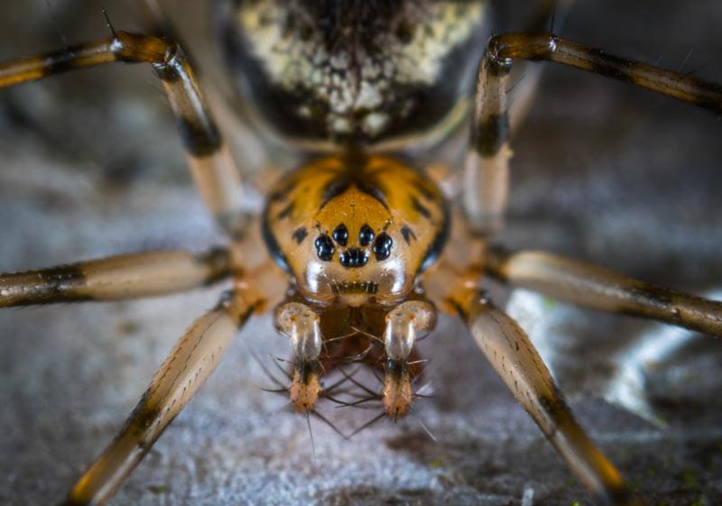 Почти все пауки, за исключением одного вида — хищники и, в основном, ведут наземный образ жизни