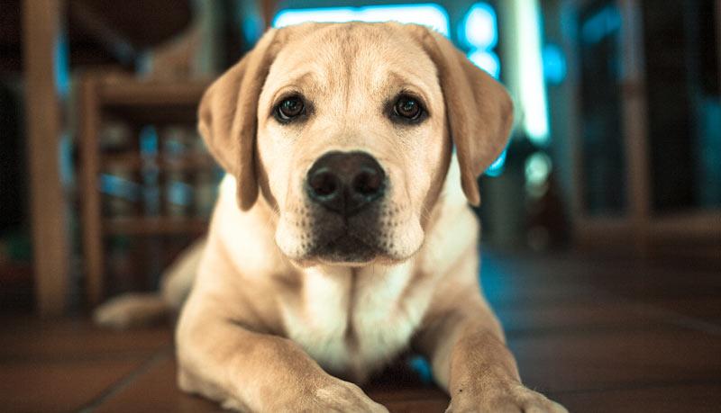 Судороги у собаки – симптомы, первая помощь, лечение, профилактика