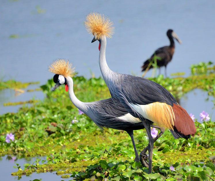 На данный момент 7 из 15 видов находятся под угрозой исчезновения