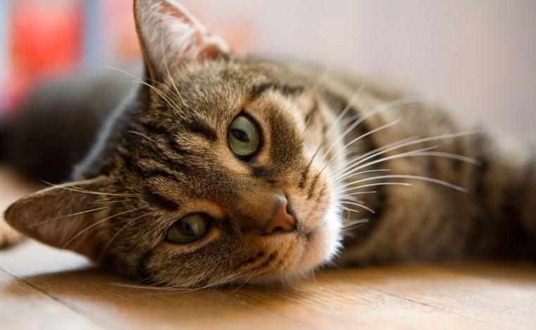 Практикующими ветеринарами назначается недельный приём препарата «Синулокс»